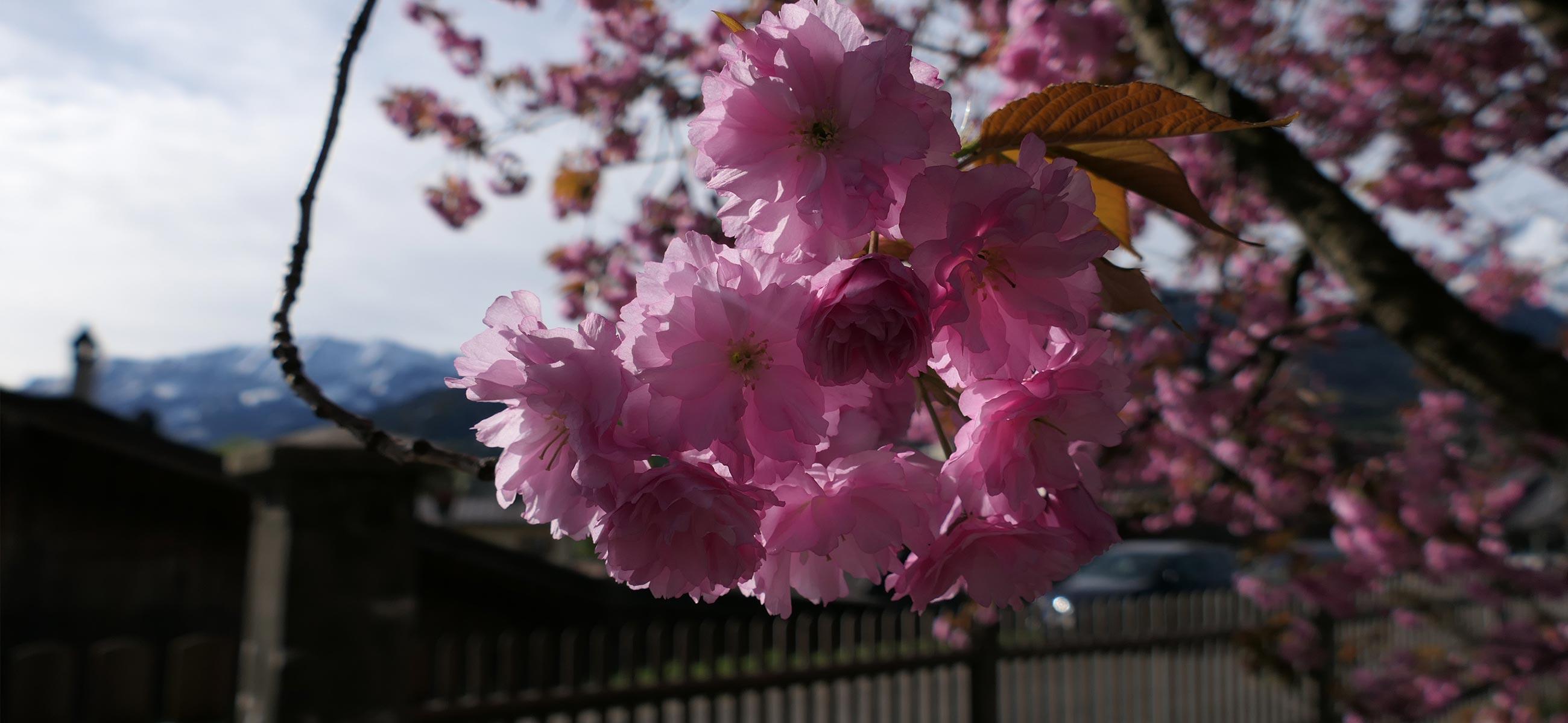 Blumen_zoepritzstrasse2